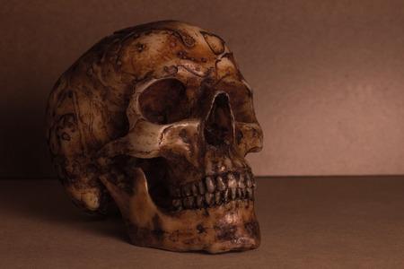 crâne sur le vieux bois encore de style de vie Banque d'images