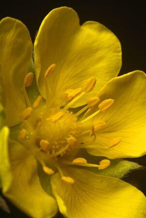 exaltation: exaltation of flowers in photo studio and macrophotografia
