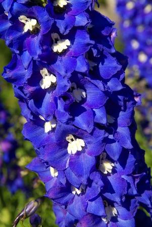 exaltation: exaltation of flowers in photo studio