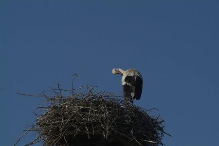 racconigi: stork in the nest; LIPU oasis Racconigi  Italy