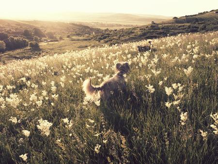 perros jugando: Perros que juegan en la pradera de verano