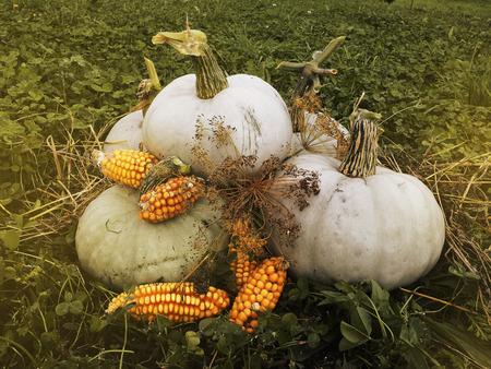 mini farm: Autumn Harvest pumpkin