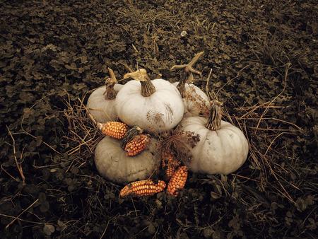 mini farm: Halloween pumpkins
