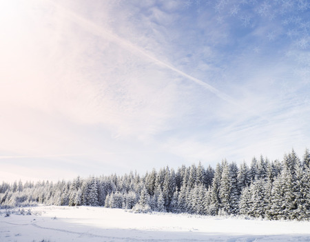 Winter Reklamní fotografie