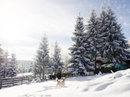 winter holiday: Dog playing in snow