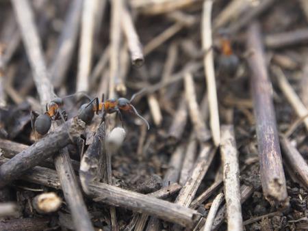 antrey: Ants Stock Photo