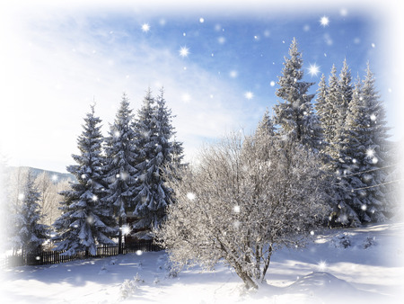 frostbitten: Winter landscape. Snowing in Christmas Stock Photo