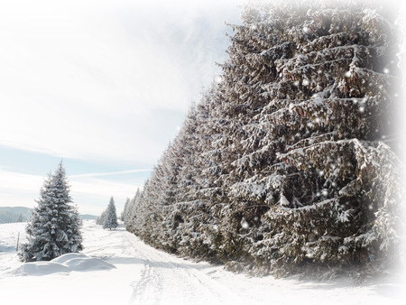 frostbitten: Winter card. Snowing on fir trees path Stock Photo