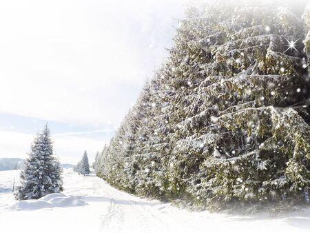 tress: Snowy fir tress. Winter card