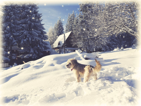 winter dog playing in the snow