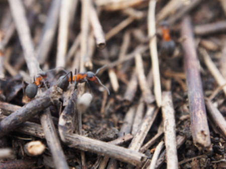 antrey: blurred ants background Stock Photo