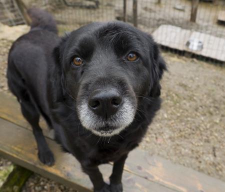 ojos tristes: perro mayor de edad abandonados, los ojos tristes Foto de archivo