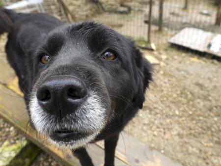 Old senior dog abandoned , sad eyes