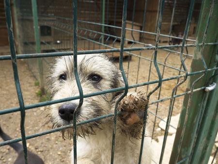 dog abandoned , sad eyes