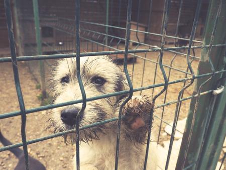 ojos tristes: abandonado perro, ojos tristes