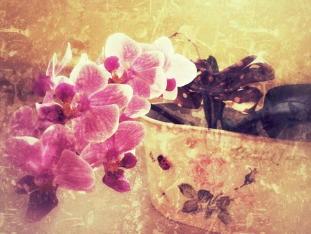 callosum: Orchid flowers, vintage background Stock Photo