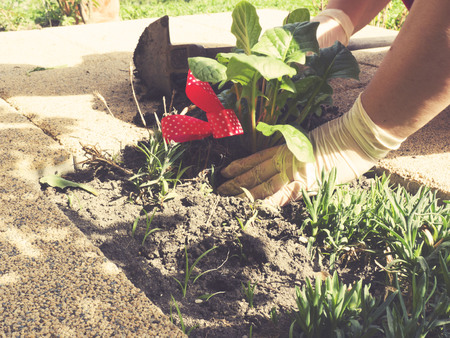 plating: gardening, plating, spring activity for seniors Stock Photo