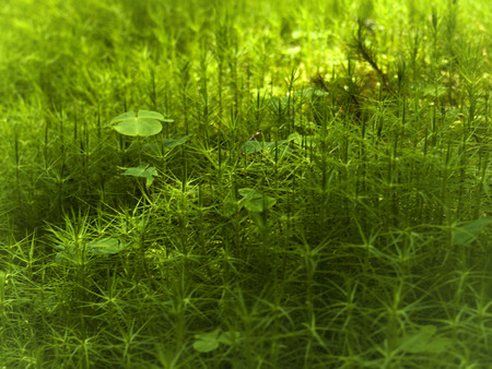 thick growth: green moss background