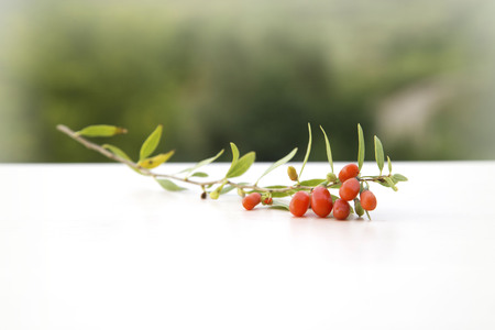 bough: branch with goji berries