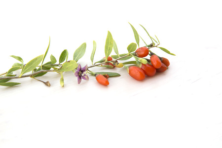 branch with goji berries