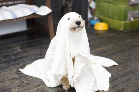 halloween dog Banque d'images