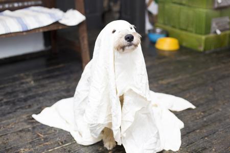 halloween dog Reklamní fotografie