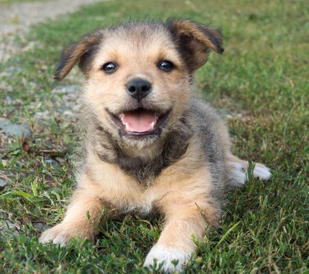 stray: stray puppy