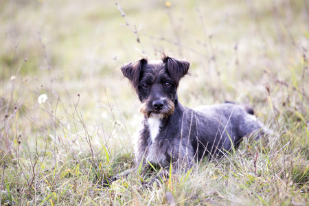 black adopted dog Stock Photo