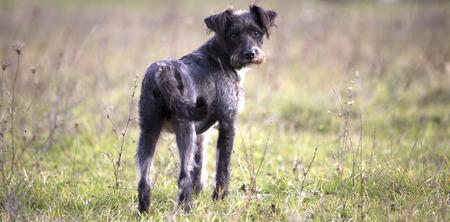 happy adopted black dog Reklamní fotografie