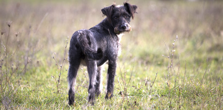 happy adopted black dog Banque d'images