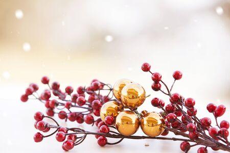 winter red berries branch