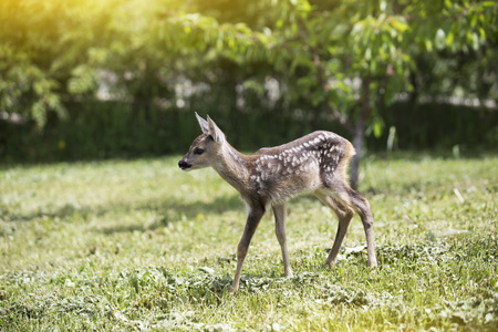 baby fawn Stock Photo