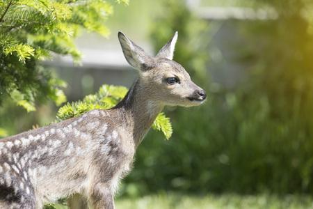wildlife background Stock Photo