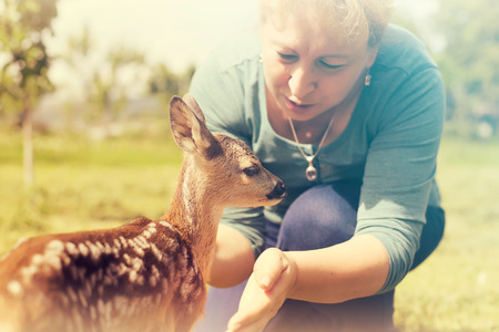 fondling: Elderly woman playing with baby fawn in the garden