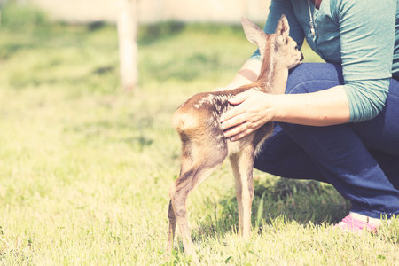 Elderly woman playing with baby fawn in the garden
