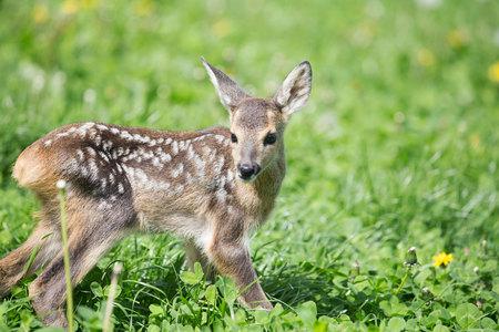 아기 사슴 스톡 콘텐츠