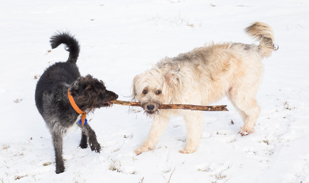 Happy dog playing in the snow