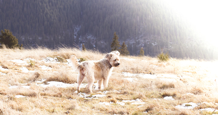 Dog playing at the mountain. Adopted pet background