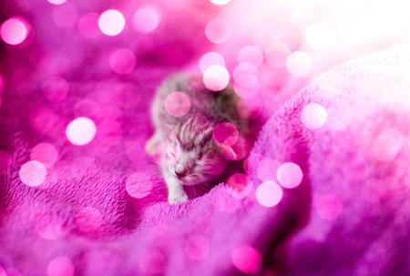 Newborn tabby kitten, adorable cat  background