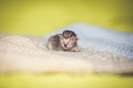 Adorable tabby kitten, newborn concept Stock Photo