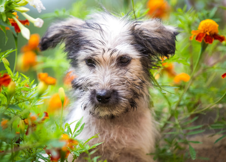 Puppy hiding in the garden