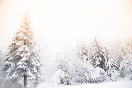 Schneebedeckter Tannenbaum Winter Wunderland Hintergrund Standard-Bild