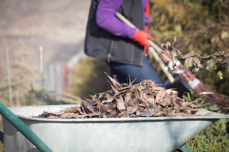 Elderly woman spring cleaning the garden