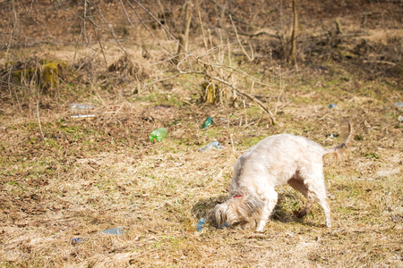 Dog  playing with plastic bottles  plastic pollution
