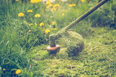 Cutting grass with a professional grass trimmer Stok Fotoğraf