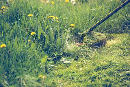 Gras schneiden mit einem professionellen Rasentrimmer Standard-Bild