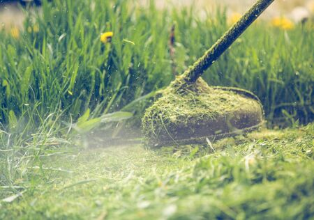Cutting grass with a professional grass trimmer Archivio Fotografico