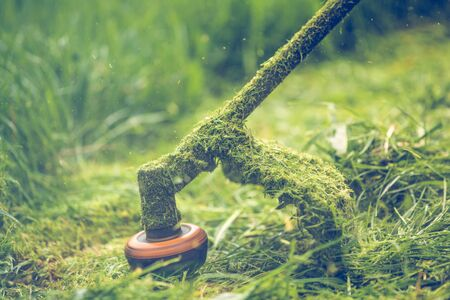 Cutting grass with a professional grass trimmer Stockfoto