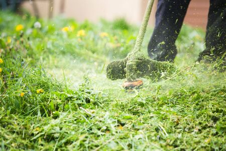 Cutting grass with a professional grass trimmer Banque d'images
