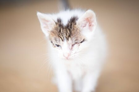 Abandoned baby kitten with eye problems 写真素材